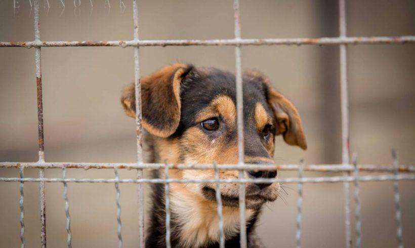 Tippeljetek, mi a közös a következő kutyákban (vigyázat, a lista nagyon hosszú):