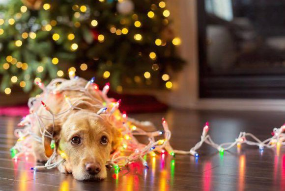 Közeledik a karácsony