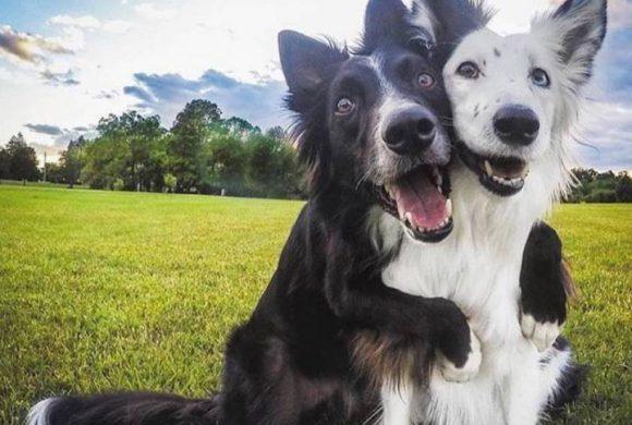 1 kutya vagy 2? 1 gyerek vagy 2?