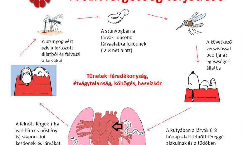 A szívférgességről.