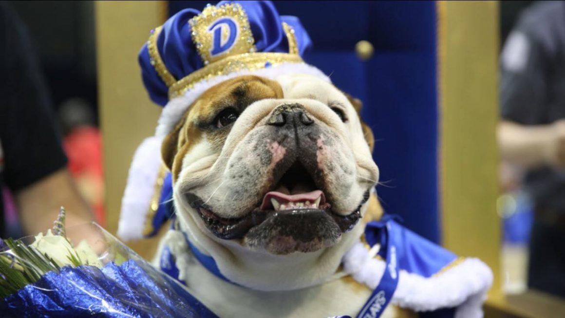 Kutya- szépségverseny