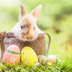 Ne vásárolj élő nyuszit húsvétra