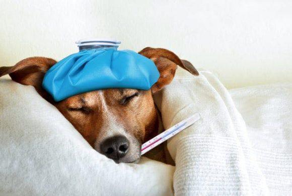 """""""Mi baja lehet a kutyámnak? Ez és ez és ez a tünete, nagyon rosszul van, adjatok tanácsot!"""""""