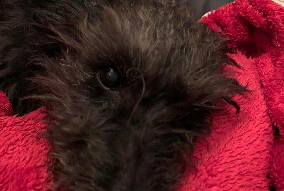 Idős kutyát örökbe fogadni a világ egyik legnemesebb feladata